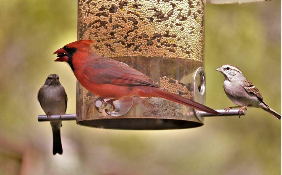 types of bird feeders